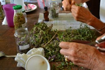 Stage 1 jour Transformation des plantes